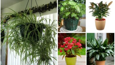 Growing Plants in your Home